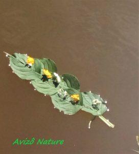 Art et Nature @ Lac du Ronzey