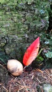 La forêt à travers les sens @ Barrage de la Gimond