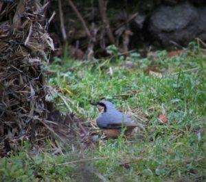 A la rencontre des oiseaux @ Pragrand